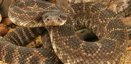 Wąż wpadł do sali obrad lokalnego parlamentu w Nigerii
