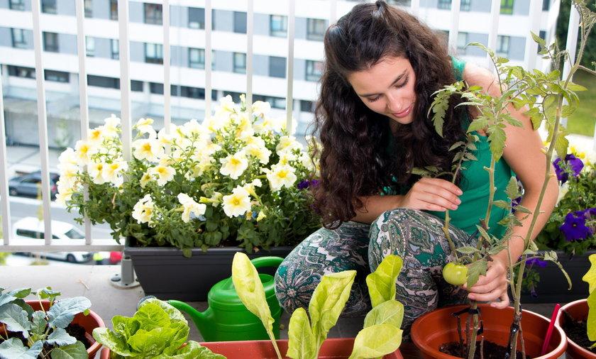 Na balkonie możemy uprawiać owoce i warzywa