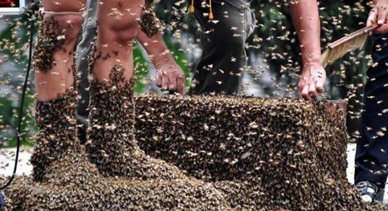 Six people attacked and wounded by aggressive bee swarm
