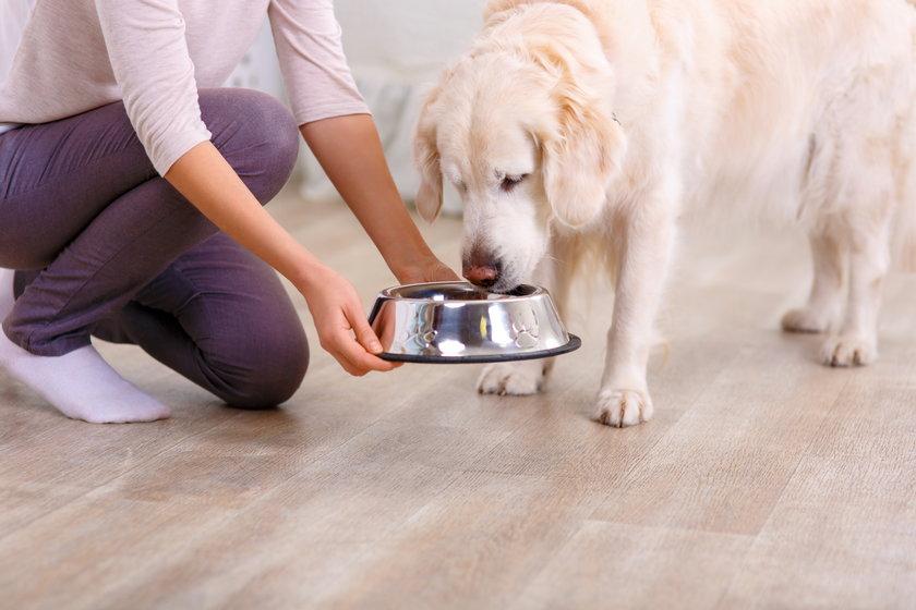 Nie pozwalaj psu kończyć po sobie posiłku. Doprawione po ludzku jedzenie może czworonogowi zaszkodzić. Trujące dla niego są zarówno czosnek, jak i cebula czy szczypiorek!