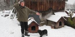 Pod Wałczem wilk porwał psa z podwórka. W Poznaniu zaatakował psy na prywatnej posesji