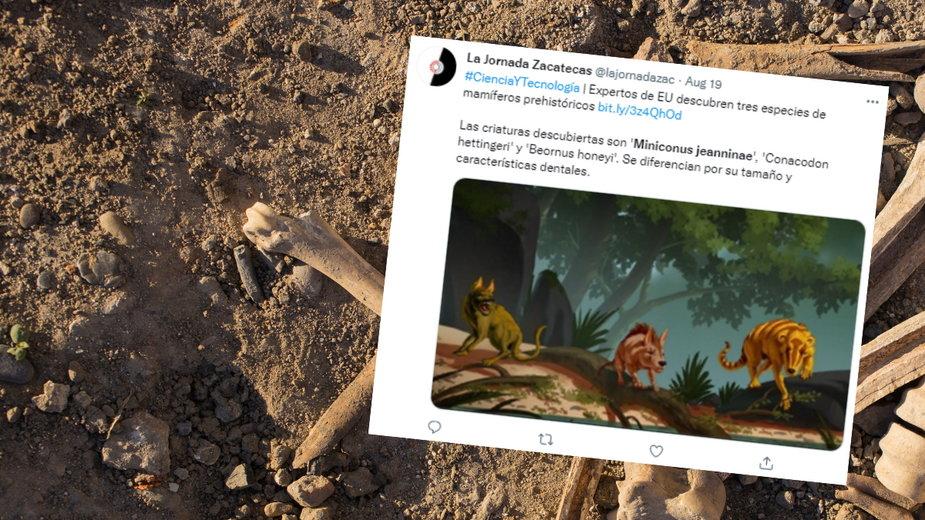 Odkryto szczątki prehistorycznych ssaków