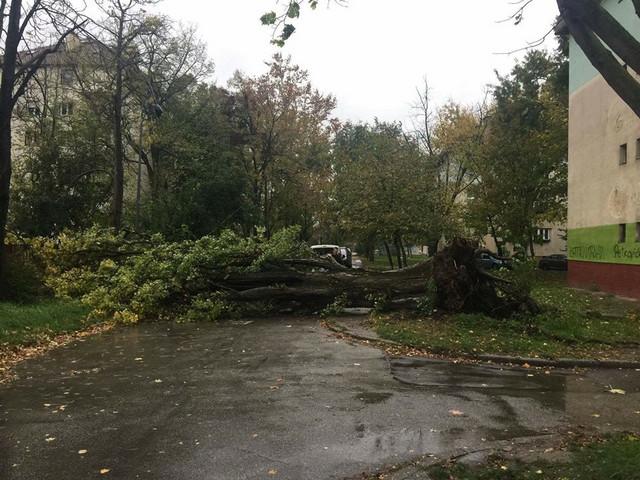 Vetar oborio drvo u Novom Sadu