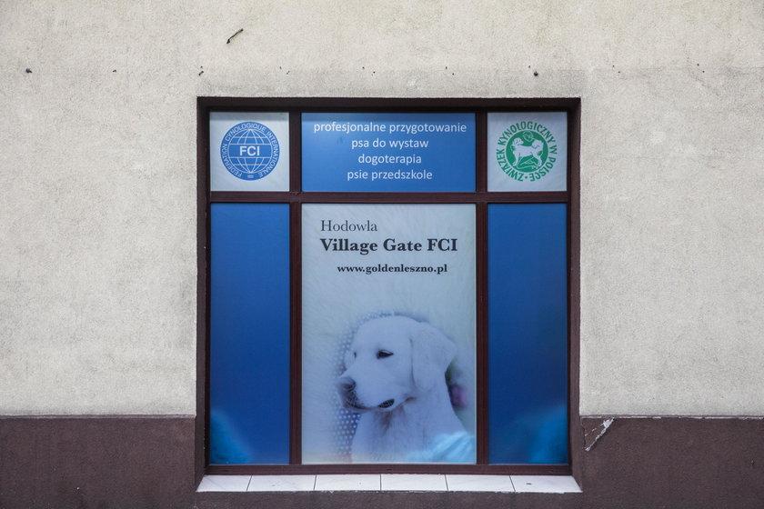 Przedszkole dla psów