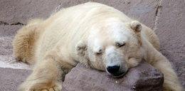 Najsmutniejszy zwierzak na ziemi ma depresję!