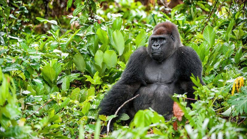 Ustawił w dżungli lustro i nagrał, jak reagują zwierzęta. Zobaczcie!