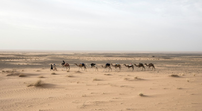 On a caravan, with one of the Sahara's last European explorers