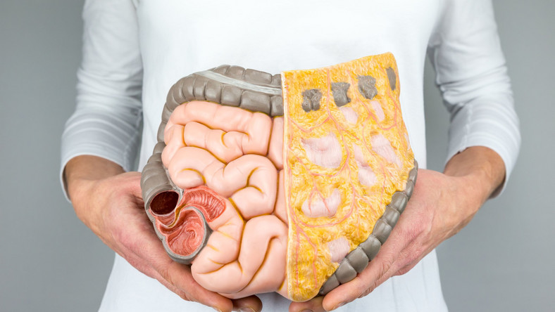 Model układu pokarmowego