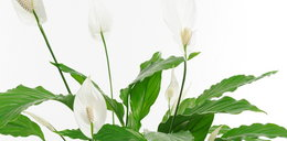 Te rośliny pomogą ci w walce ze smogiem