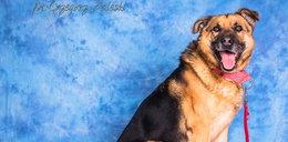 Kto pokocha Misia? Ten pies przeżył piekło w schronisku w Radysach!