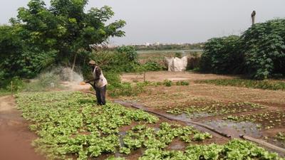 Accès à l'eau : Des exploitations agricoles des Niayes menacées
