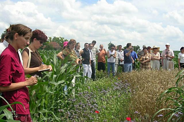 Za pripremu zemljišta, na kome će se uzgajati organsko povrće, potrebno tri godine