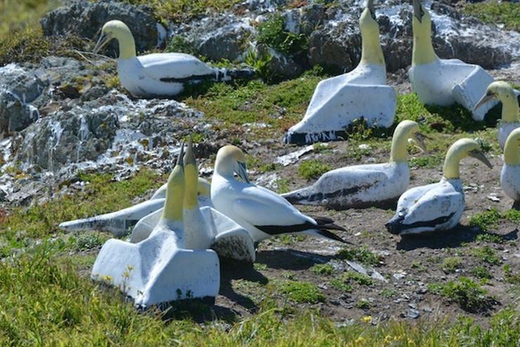 Najdžel među ostalim pticama