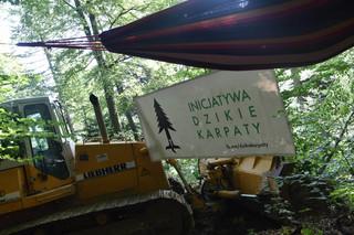 Protesty dotarły w Bieszczady. Aktywiści blokują wycinkę drzew w otulinie parku narodowego