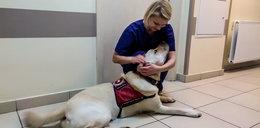 Niesamowite! Ten pies pomaga lekarzom walczącym z COVID-19 w jarocińskim szpitalu
