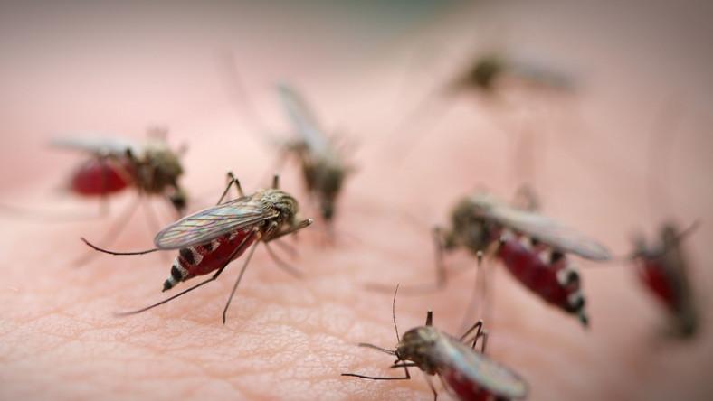 Malarię wywołuje pierwotniak - zarodziec malarii z rodzaju Plasmodium - przenoszony przez samice komara widliszka (rodzaj Anopheles)