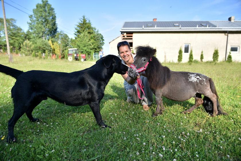 Mam konika mniejszego niż pies