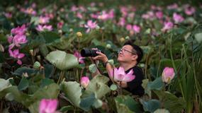W Parku Narodowym Khao Sam Roi Yot po 10 latach zakwitły lotosy