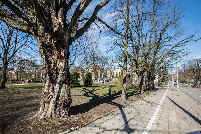 Wycinka drzew w Poznaniu