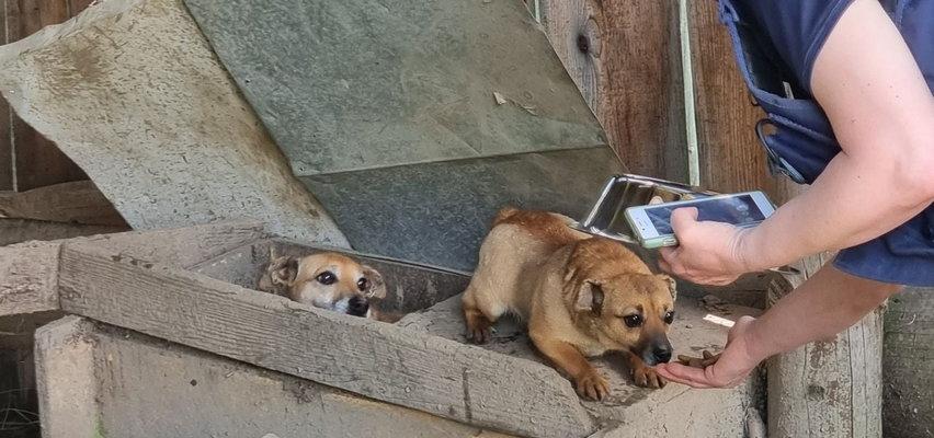 Horror na południu Polski. W gospodarstwie hodowano psy na smalec