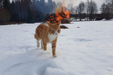 demonske mačke02 foto Reddit Subtractive_