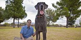 Zmarł największy pies świata