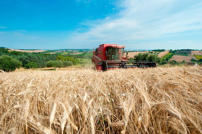 Većina durum pšenice raste upravo u Italiji