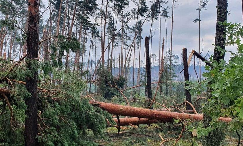 Ogromne zniszczenia po nawałnicach