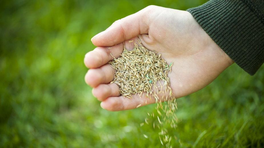 Szybkość wzrostu trawy zależy od wielu czynników - Elenathewise/stock.adobe.com