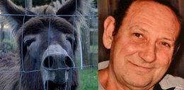 Szok! Dwa osły zamordowały emeryta