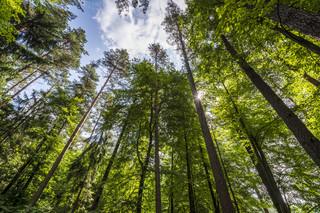 Zwiększone zagrożenie pożarowe w lasach