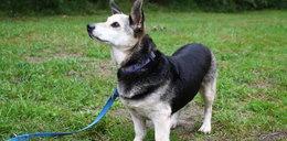 Pies Kinio szuka domu!
