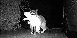 Kot-złodziej złapany na gorącym uczynku