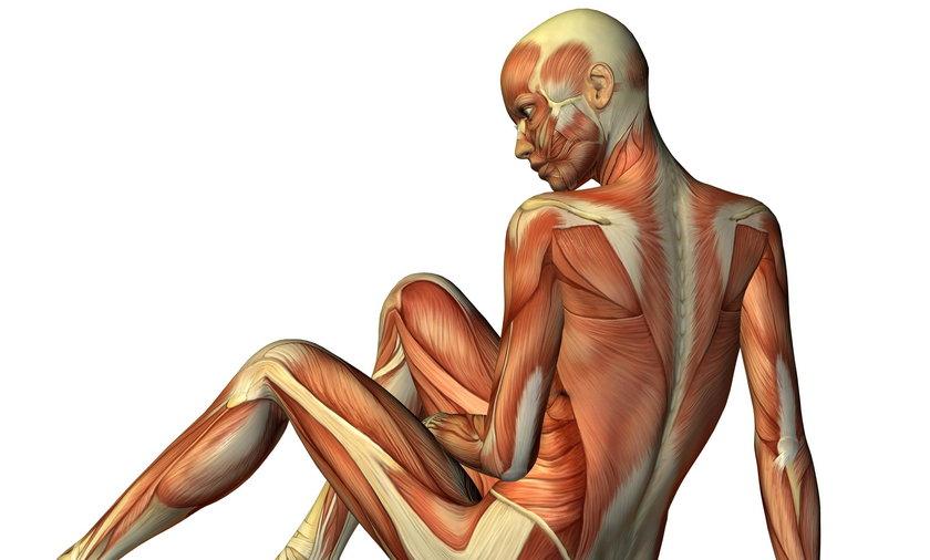Nowo odkryta struktura – interstitium – może chronić mięśnie przed uszkodzeniem – podkreślają naukowcy. Ta tkanka działa jak amortyzator