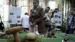 Wystawa trujących grzybów