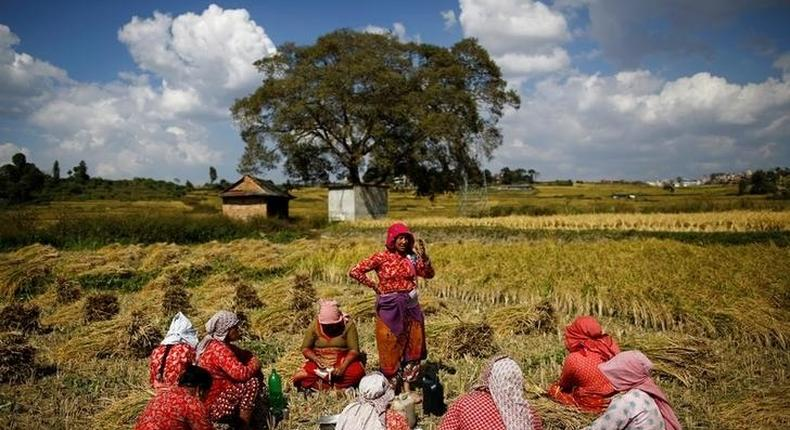 Farmers have lunch as they take a break from harvesting rice on a field in Lalitpur, Nepal October 26, 2016. REUTERS/Navesh Chitrakar