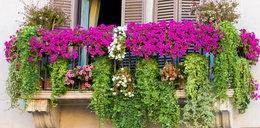 Oto 6 najlepszych roślin na balkon!