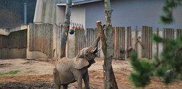Zoo zatrudni nowych pracowników