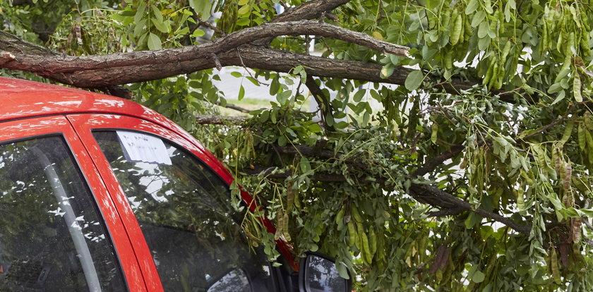 Drzewo zmiażdżyło samochód. Kierowca nie miał szans