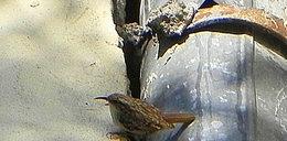 Zakleił ptasie gniazdo pianką montażową. Przez niego zginęły pisklęta!