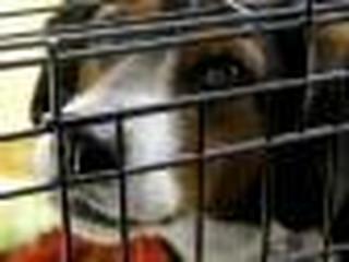 Za szkody spowodowane przez psy w wynajmowanym mieszkaniu trzeba zapłacić