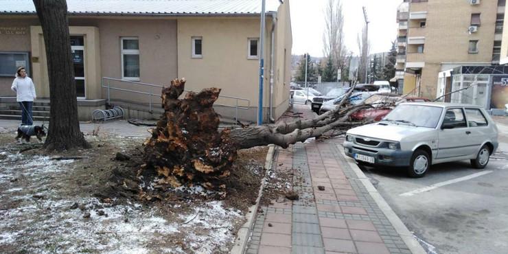 Stablo-iscupano-iz-korena