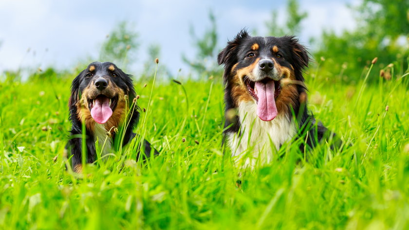 Skutecznie chronimy psa przed kleszczami