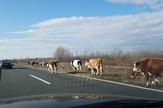 krave autoput