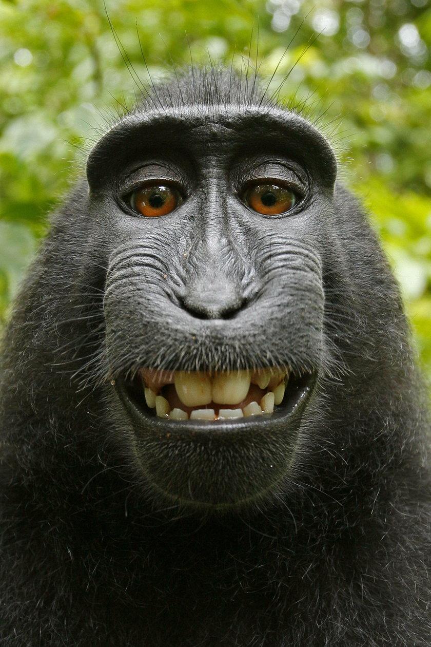 Te zdjęcia poprawią ci humor! Zobacz, jak one się szczerzą