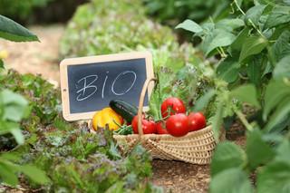 Ekologiczna żywność to nie tylko mięso z probówki