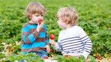 Oto kilka powodów, by nie odmawiać sobie truskawek
