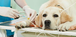Jeśli twój pies przyciska głowę do ściany, koniecznie zabierz go do weterynarza!