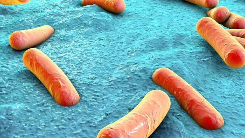 Salmonella to bardzo niebezpieczna bakteria