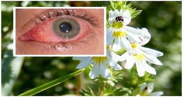 Növényi látás